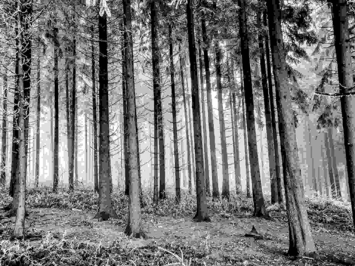 Trees in woods